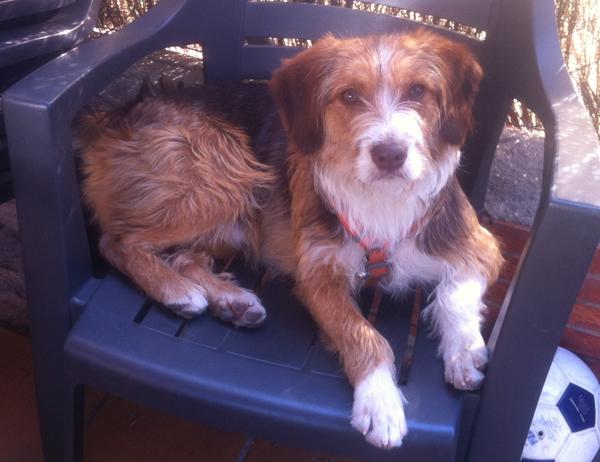 Crack, uno de nuestros perros de TAA rescatado del CPA de la mancomunidad del Henares